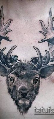 фото тату олень с рогами (tattoo) (значение) – пример рисунка – 019 tatufoto.com