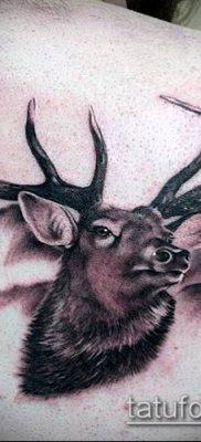 фото тату олень с рогами (tattoo) (значение) – пример рисунка – 022 tatufoto.com
