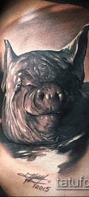 тату свинья №182 – классный вариант рисунка, который успешно можно использовать для переработки и нанесения как тату свинья