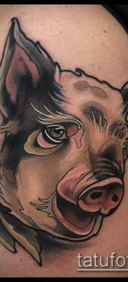 тату свинья №286 – эксклюзивный вариант рисунка, который хорошо можно использовать для переделки и нанесения как Pig tattoo