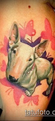 Фото тату бультерьер – 18052017 – пример – 007 Bull terrier tattoo