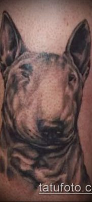 Фото тату бультерьер – 18052017 – пример – 054 Bull terrier tattoo