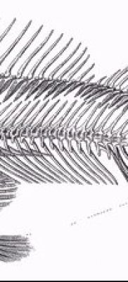 Фото тату скелет рыбы – пример рисунка – 30052017 – пример – 052 Fish skeleton tattoo