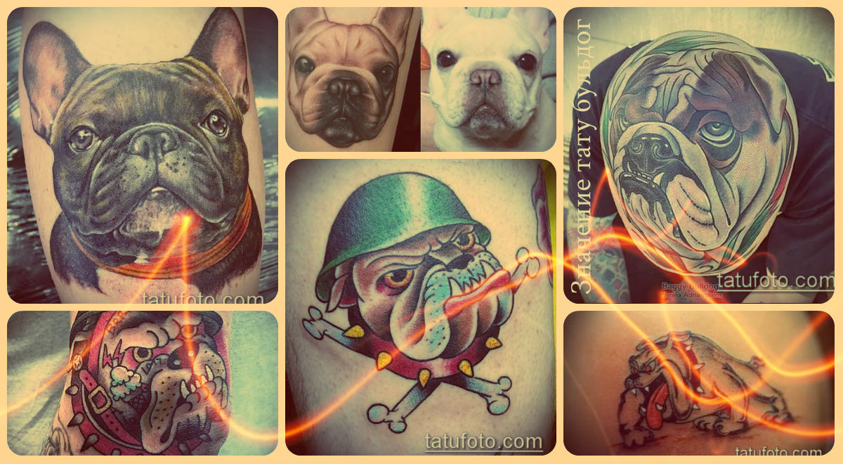 Значение тату бульдог - фото примеры готовых рисунков