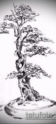 Фото тату бонсай – 19062017 – пример – 013 Bonsai tattoo – tatufoto.com