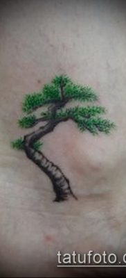 Фото тату бонсай – 19062017 – пример – 048 Bonsai tattoo – tatufoto.com