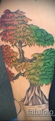 Фото тату бонсай – 19062017 – пример – 081 Bonsai tattoo – tatufoto.com