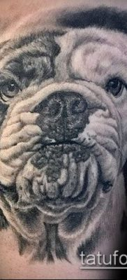 Фото тату бульдог – 03062017 – пример – 006 Bulldog tattoo