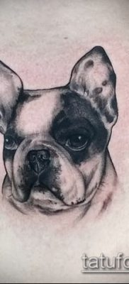 Фото тату бульдог – 03062017 – пример – 022 Bulldog tattoo