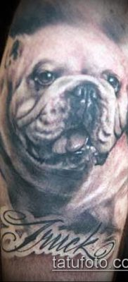 Фото тату бульдог – 03062017 – пример – 033 Bulldog tattoo