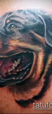 Фото тату ротвейлер – 06062017 – пример – 001 Rottweiler tattoo