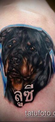 Фото тату ротвейлер – 06062017 – пример – 002 Rottweiler tattoo