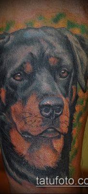 Фото тату ротвейлер – 06062017 – пример – 003 Rottweiler tattoo