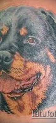 Фото тату ротвейлер – 06062017 – пример – 010 Rottweiler tattoo