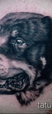 Фото тату ротвейлер – 06062017 – пример – 011 Rottweiler tattoo