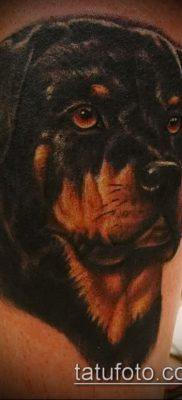 Фото тату ротвейлер – 06062017 – пример – 014 Rottweiler tattoo