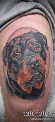 Фото тату ротвейлер – 06062017 – пример – 015 Rottweiler tattoo
