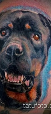 Фото тату ротвейлер – 06062017 – пример – 017 Rottweiler tattoo