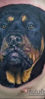 Фото тату ротвейлер – 06062017 – пример – 018 Rottweiler tattoo