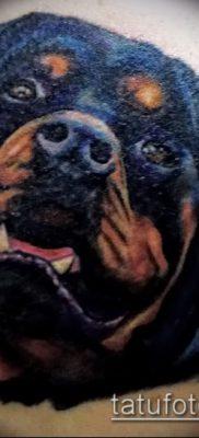 Фото тату ротвейлер – 06062017 – пример – 029 Rottweiler tattoo