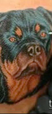 Фото тату ротвейлер – 06062017 – пример – 031 Rottweiler tattoo