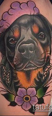 Фото тату ротвейлер – 06062017 – пример – 033 Rottweiler tattoo
