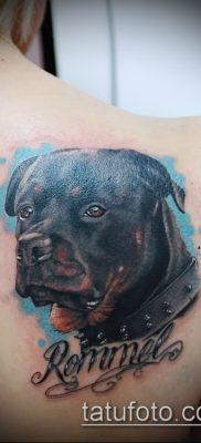 Фото тату ротвейлер – 06062017 – пример – 035 Rottweiler tattoo