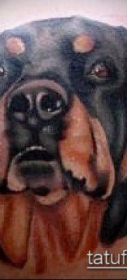 Фото тату ротвейлер – 06062017 – пример – 044 Rottweiler tattoo