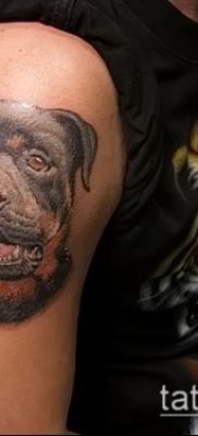 Фото тату ротвейлер – 06062017 – пример – 045 Rottweiler tattoo