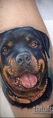 Фото тату ротвейлер – 06062017 – пример – 047 Rottweiler tattoo