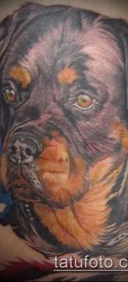 Фото тату ротвейлер – 06062017 – пример – 048 Rottweiler tattoo