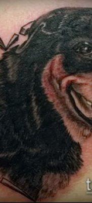 Фото тату ротвейлер – 06062017 – пример – 053 Rottweiler tattoo