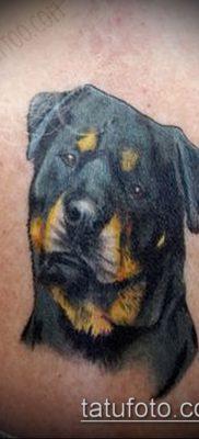 Фото тату ротвейлер – 06062017 – пример – 054 Rottweiler tattoo