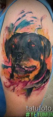 Фото тату ротвейлер – 06062017 – пример – 055 Rottweiler tattoo