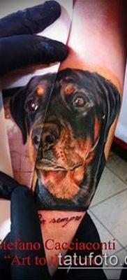 Фото тату ротвейлер – 06062017 – пример – 057 Rottweiler tattoo