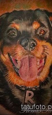 Фото тату ротвейлер – 06062017 – пример – 060 Rottweiler tattoo