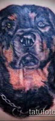 Фото тату ротвейлер – 06062017 – пример – 061 Rottweiler tattoo