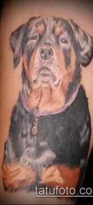 Фото тату ротвейлер – 06062017 – пример – 063 Rottweiler tattoo