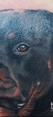 Фото тату ротвейлер – 06062017 – пример – 065 Rottweiler tattoo