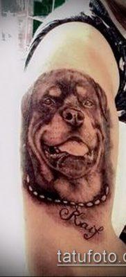 Фото тату ротвейлер – 06062017 – пример – 069 Rottweiler tattoo