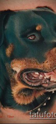 Фото тату ротвейлер – 06062017 – пример – 073 Rottweiler tattoo