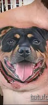 Фото тату ротвейлер – 06062017 – пример – 074 Rottweiler tattoo
