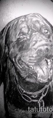 Фото тату ротвейлер – 06062017 – пример – 075 Rottweiler tattoo