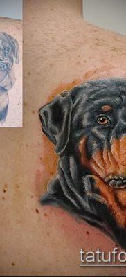 Фото тату ротвейлер – 06062017 – пример – 078 Rottweiler tattoo