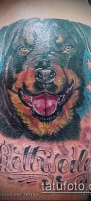 Фото тату ротвейлер – 06062017 – пример – 081 Rottweiler tattoo