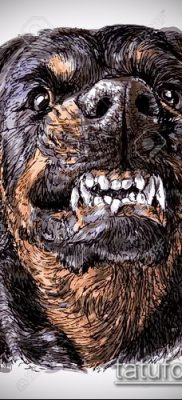 Фото тату ротвейлер – 06062017 – пример – 083 Rottweiler tattoo 23422