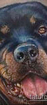 Фото тату ротвейлер – 06062017 – пример – 085 Rottweiler tattoo