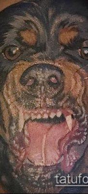 Фото тату ротвейлер – 06062017 – пример – 088 Rottweiler tattoo