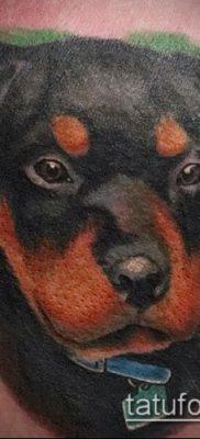 Фото тату ротвейлер – 06062017 – пример – 089 Rottweiler tattoo