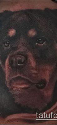 Фото тату ротвейлер – 06062017 – пример – 090 Rottweiler tattoo